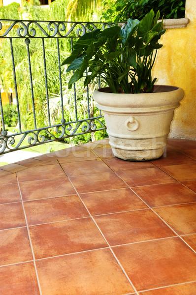 Plant on tiled Mexican veranda Stock photo © elenaphoto