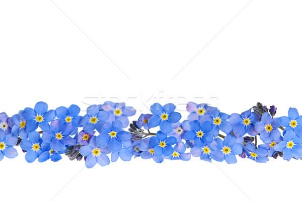 Blue spring flower border Stock photo © elenaphoto