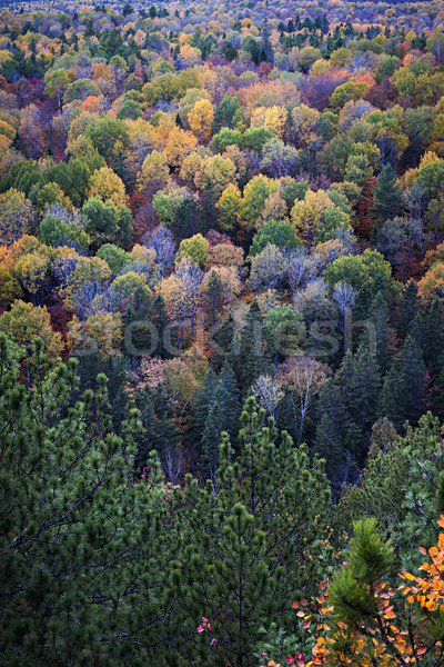 Fall treetops Stock photo © elenaphoto