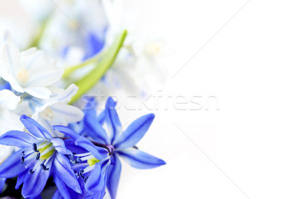 Spring flowers background Stock photo © elenaphoto
