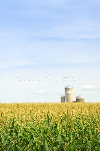 Zdjęcia stock: Kukurydza · dziedzinie · rolniczy · krajobraz · mały · skali