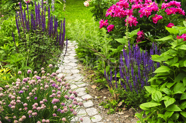 Path in blooming garden Stock photo © elenaphoto