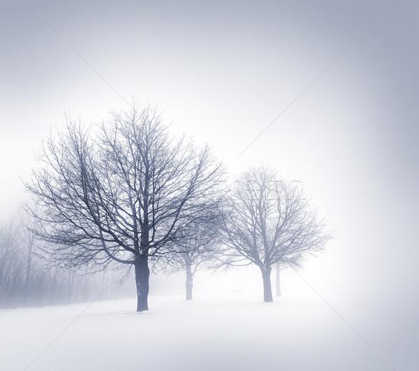 Photo stock: Hiver · arbres · brouillard · espace · de · copie