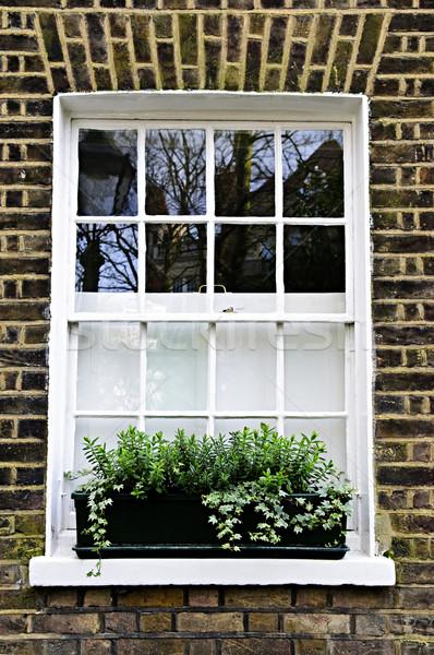 Pencere Londra bitki kutu tuğla duvar ev Stok fotoğraf © elenaphoto