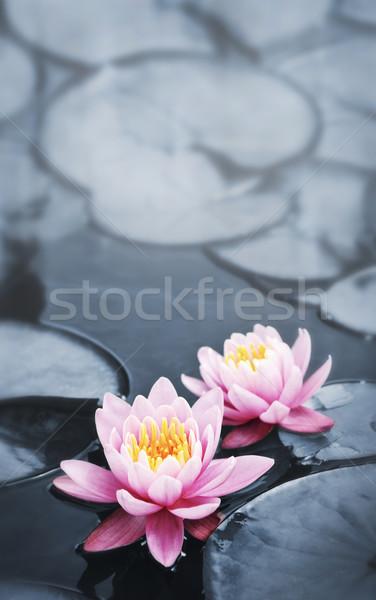 Lotus blossoms Stock photo © elenaphoto