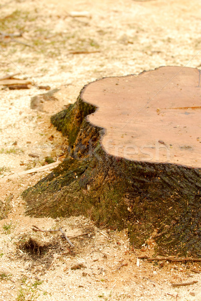 Tree stump Stock photo © elenaphoto