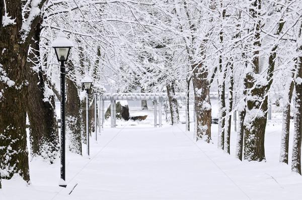Stock photo: Lane in winter park