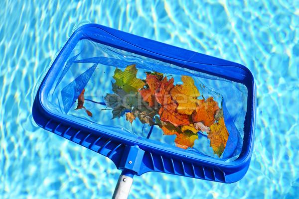 Stok fotoğraf: Yaprakları · havuz · temizlik · yüzme · havuzu · düşmek · mavi