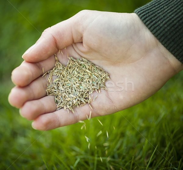 Hand planting grass seeds Stock photo © elenaphoto