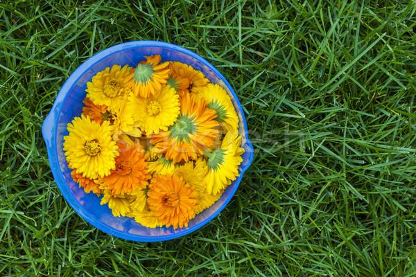 Calendula flowers in a bowl Stock photo © elenaphoto