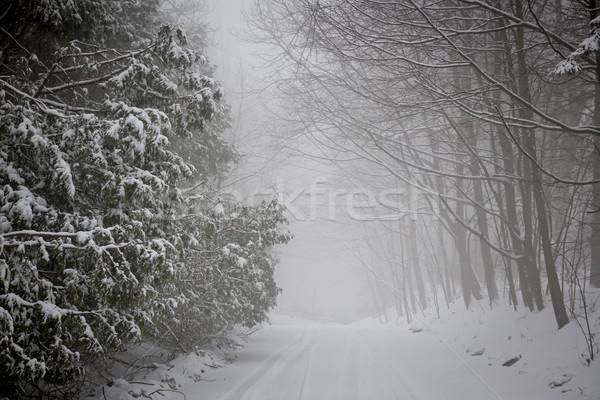 Inverno strada nevicate alberi scivoloso coperto Foto d'archivio © elenaphoto