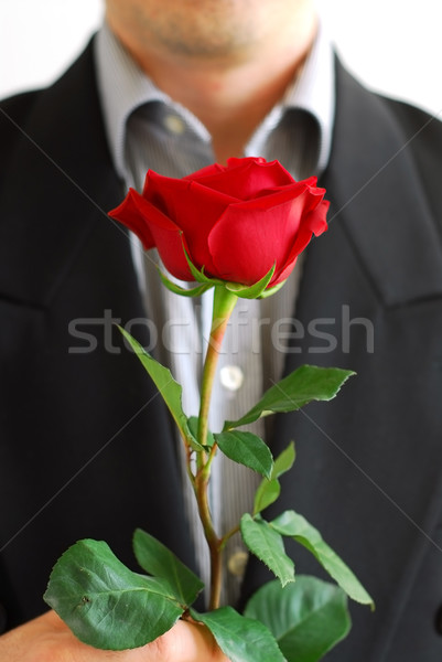 Man red rose Stock photo © elenaphoto