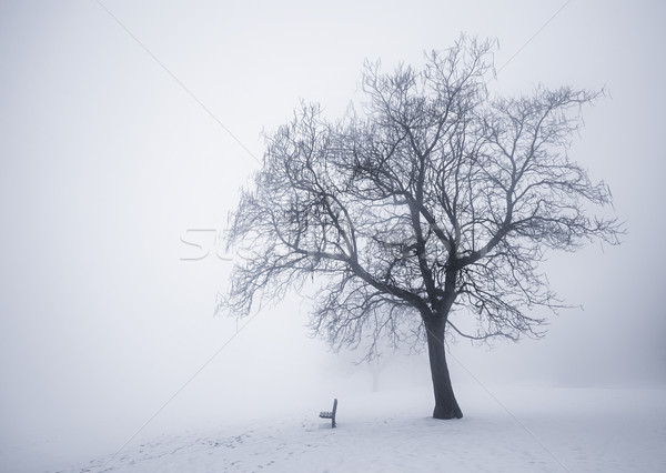 Winter Baum Nebel Park Stock foto © elenaphoto