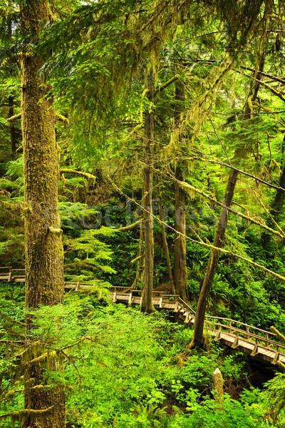 Camino selva selva tropical parque Foto stock © elenaphoto