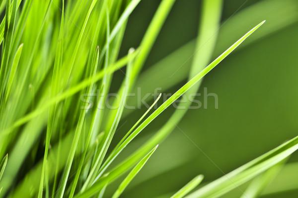 Green grass background Stock photo © elenaphoto