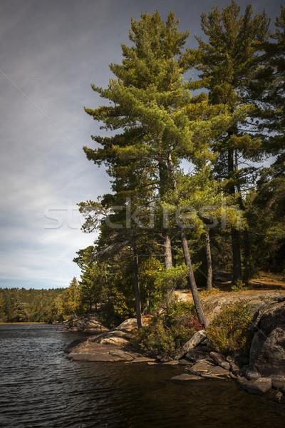 Tall pines on lake shore Stock photo © elenaphoto