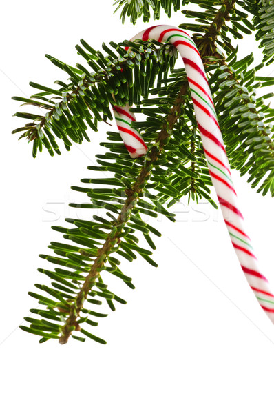Candy cane on tree Stock photo © elenaphoto