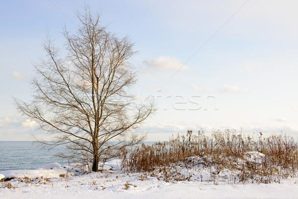 Winter shore of lake Ontario Stock photo © elenaphoto