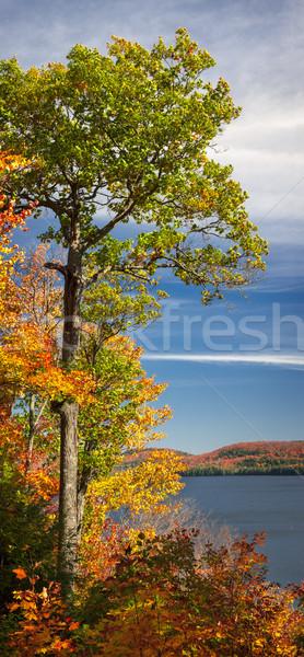 Düşmek meşe ağacı sonbahar göl kıyı Stok fotoğraf © elenaphoto