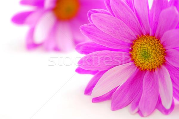 Stock fotó: Rózsaszín · virágok · közelkép · fehér · virág · esküvő