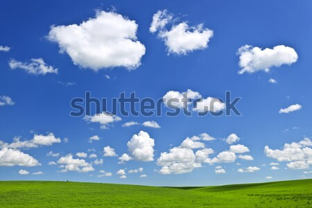 Green rolling hills under blue sky Stock photo © elenaphoto