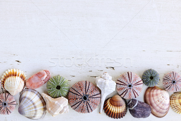 Background with seashells Stock photo © elenaphoto