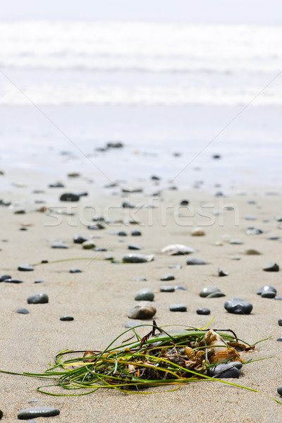 Beach detail on Pacific ocean coast of Canada Stock photo © elenaphoto