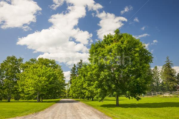 Rural landscape with maple trees Stock photo © elenaphoto