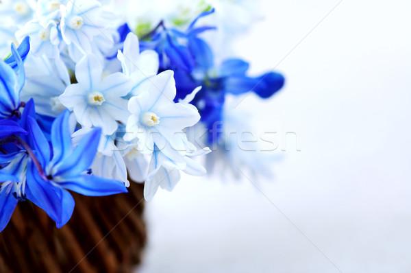 Foto d'archivio: Primo · fiori · di · primavera · blu · bouquet · basket · Pasqua