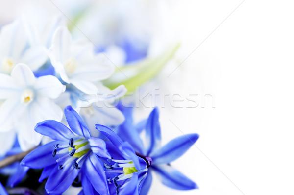 Fiori di primavera floreale primo fiore fiori Foto d'archivio © elenaphoto