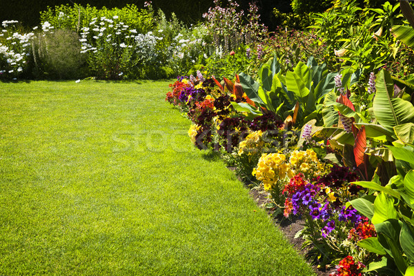 Colorful garden flowers Stock photo © elenaphoto