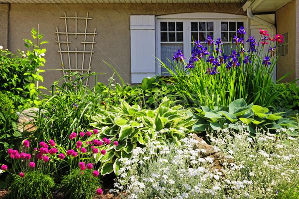 Résidentiel jardin aménagement paysager fleurs plantes fleur Photo stock © elenaphoto