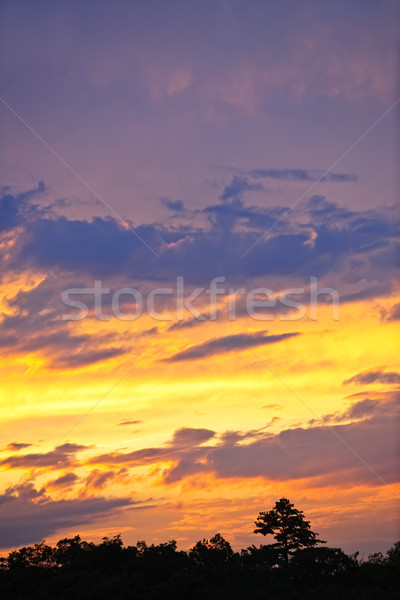 Spectacular sunset Stock photo © elenaphoto
