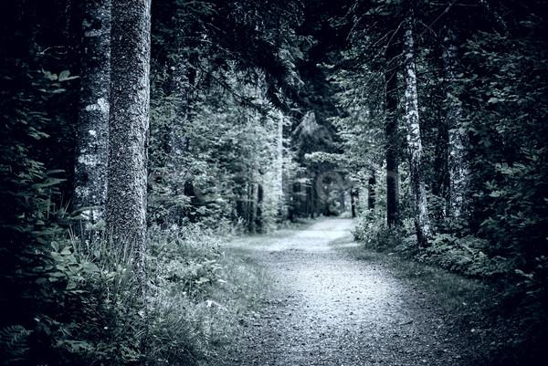 Path in dark night forest Stock photo © elenaphoto