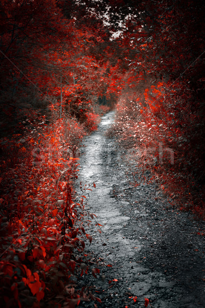 Old path in red forest Stock photo © elenaphoto