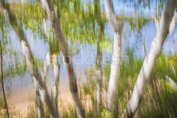 Birch trees on lake shore Stock photo © elenaphoto