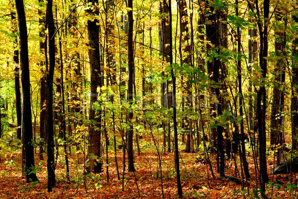 Fall forest landscape Stock photo © elenaphoto