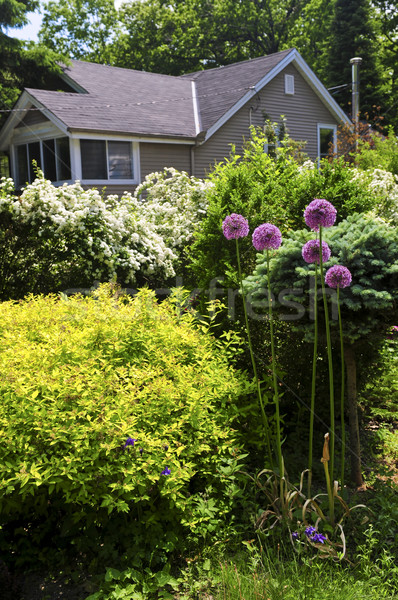 дома цветения саду домой газона Сток-фото © elenaphoto