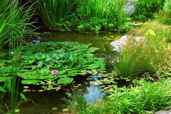 Vijver landscaping aquatisch planten water lelies Stockfoto © elenaphoto