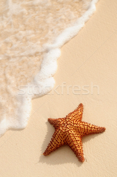 Starfish and ocean wave Stock photo © elenaphoto
