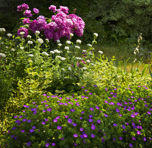Summer garden Stock photo © elenaphoto