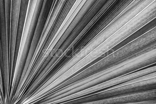Palm leaf texture Stock photo © elenaphoto