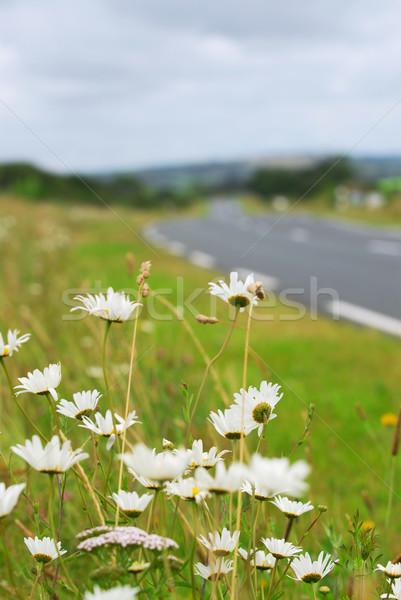 Country road Stock photo © elenaphoto