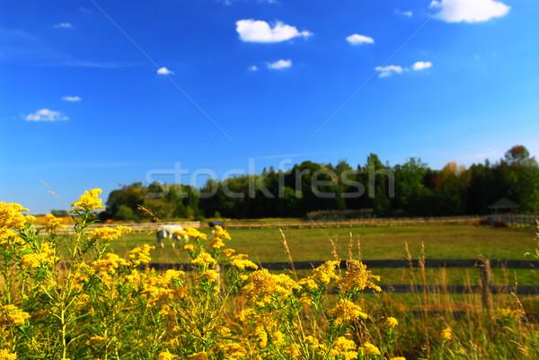 Rural landscape Stock photo © elenaphoto