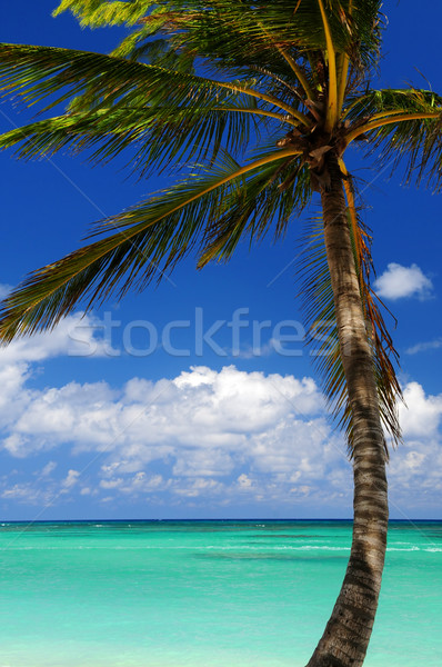 Scenic view on Caribbean sea Stock photo © elenaphoto