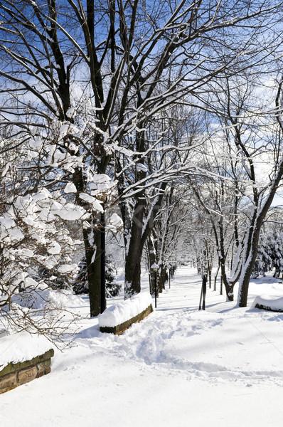 Invierno parque Toronto pesado nevadas árbol Foto stock © elenaphoto
