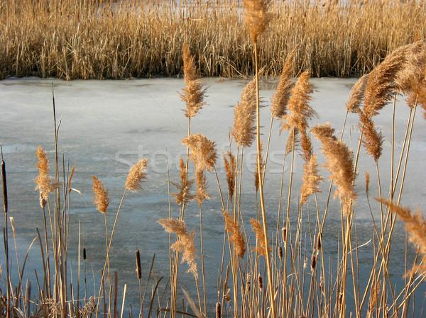 Hiver étang congelés fleur fleurs herbe Photo stock © elenaphoto