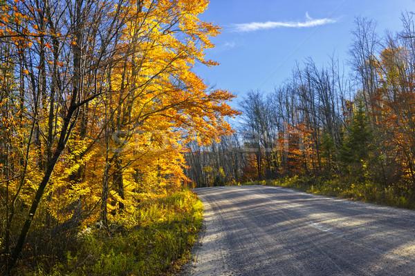 Fall forest road Stock photo © elenaphoto