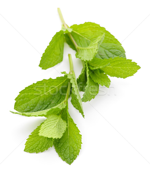 Mint sprigs Stock photo © elenaphoto