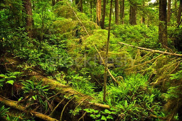 Lush temperate rainforest Stock photo © elenaphoto